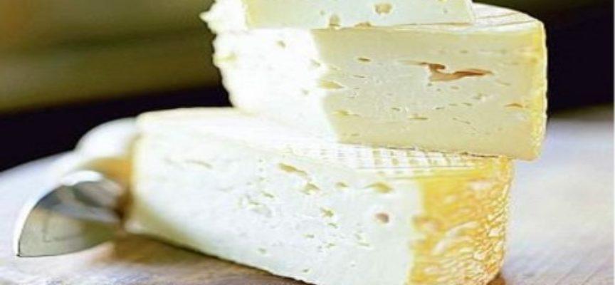 Allerta in Europa per il formaggio pastorizzato di latte vaccino ungherese con Listeria venduto in Italia.