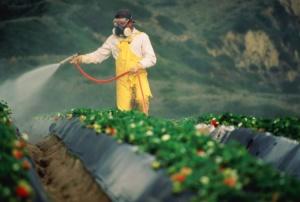 pesticidi-agricoltura_jpg_982521881