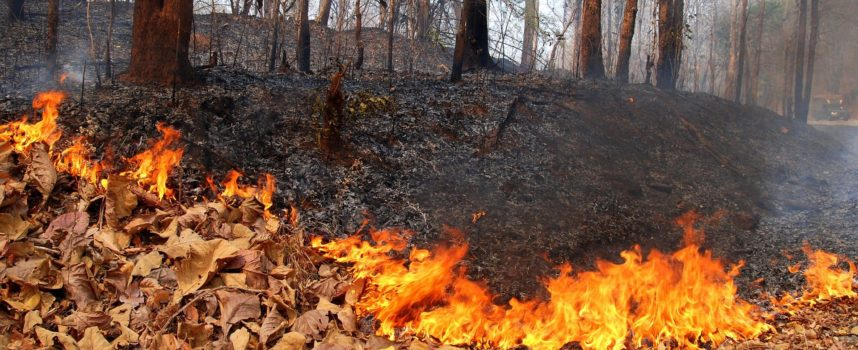 Prevenzione incendi: fino al 31 agosto divieto assoluto di accendere fuochi sul territorio comunale di Seravezza