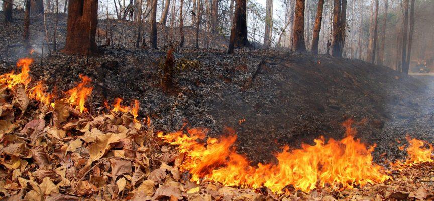 E se gli incendi estivi fossero provocati per incentivare un giro di affari milionario?