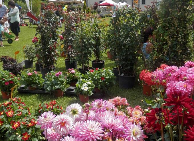 Giardino Fiorito: oggi il gran finale a Palazzo Mediceo