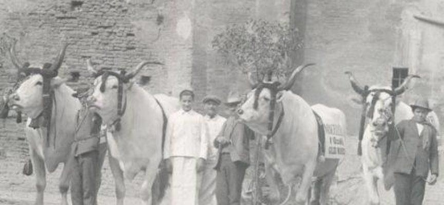 La antiche Fiere bovine.