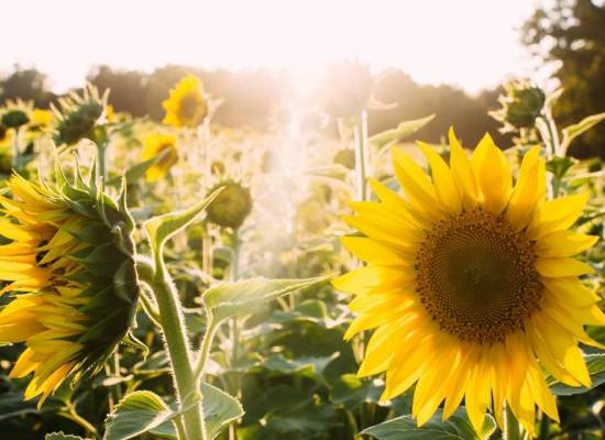 Oggi 21 Giugno inizia ufficialmente l'estate astronomica con il SOLSTIZIO D'ESTATE….