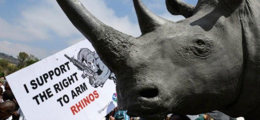 """Accadde oggi, 5 Giugno: Giornata Mondiale dell'Ambiente, l'Onu la dedica a traffico di animali protetti e bracconaggio: """"Quarta mafia mondiale"""""""