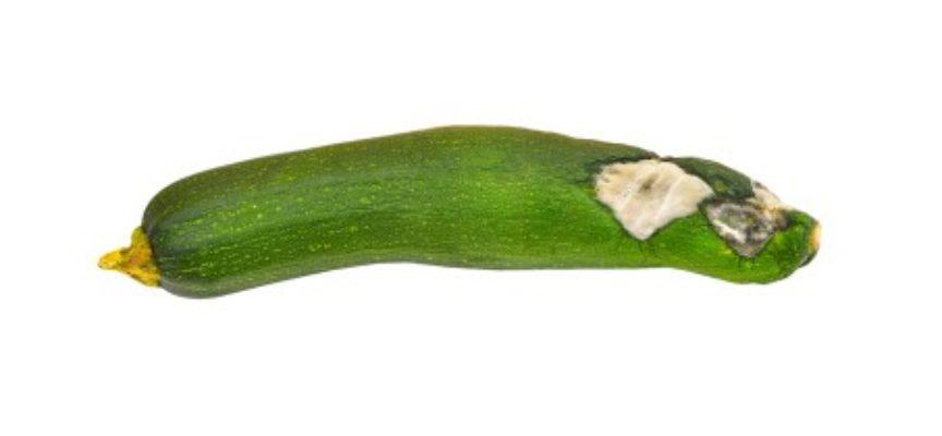 Malattie delle zucchine: quali sono e come curarle
