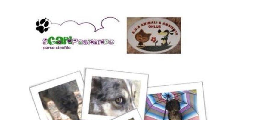 domenica 17 giugno a saltocchio SCATTI DI CANI pomeriggio dedicato al cane con mostra fotografica