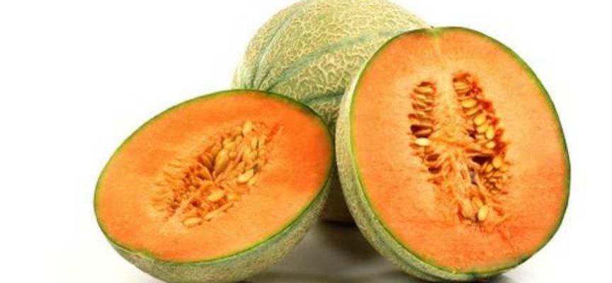 Il melone consigli e scheda di coltivazione verde for Melone coltivazione