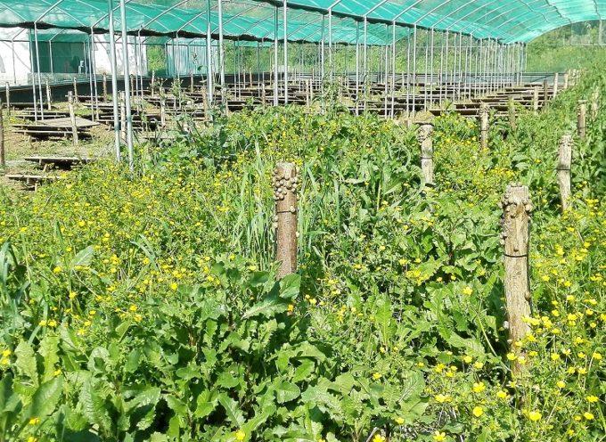 Allevamento chiocciole, mercato in crescita. Oltre 2 milioni di lumache prodotte nel 2018
