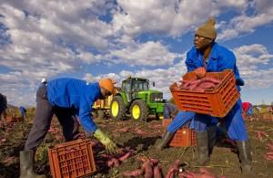 104339_lavoratori_migranti