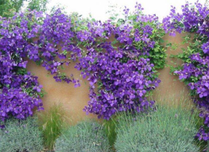 L'impiego del colore è un fattore importante nei piccoli giardini,