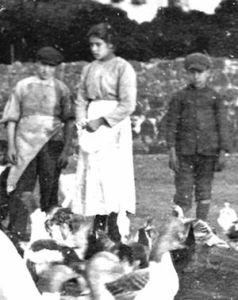 6 luglio goretti 1902
