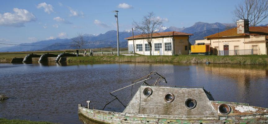 Un'alga per depurare il Lago di Massaciuccoli