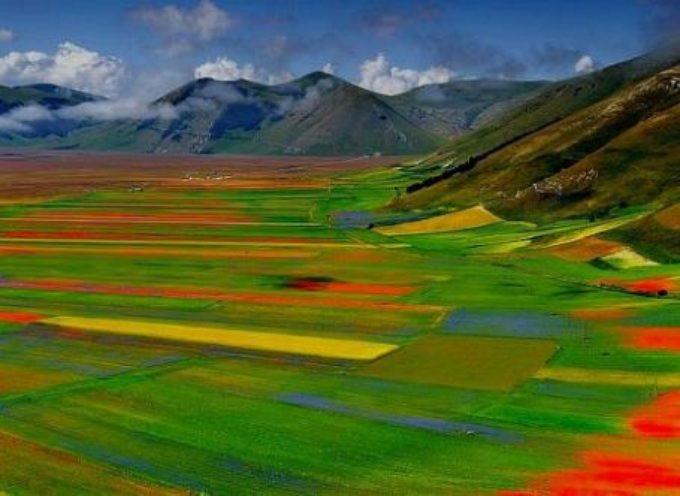 Castelluccio esplode di colori: è una delle fioriture più belle degli ultimi 10 anni