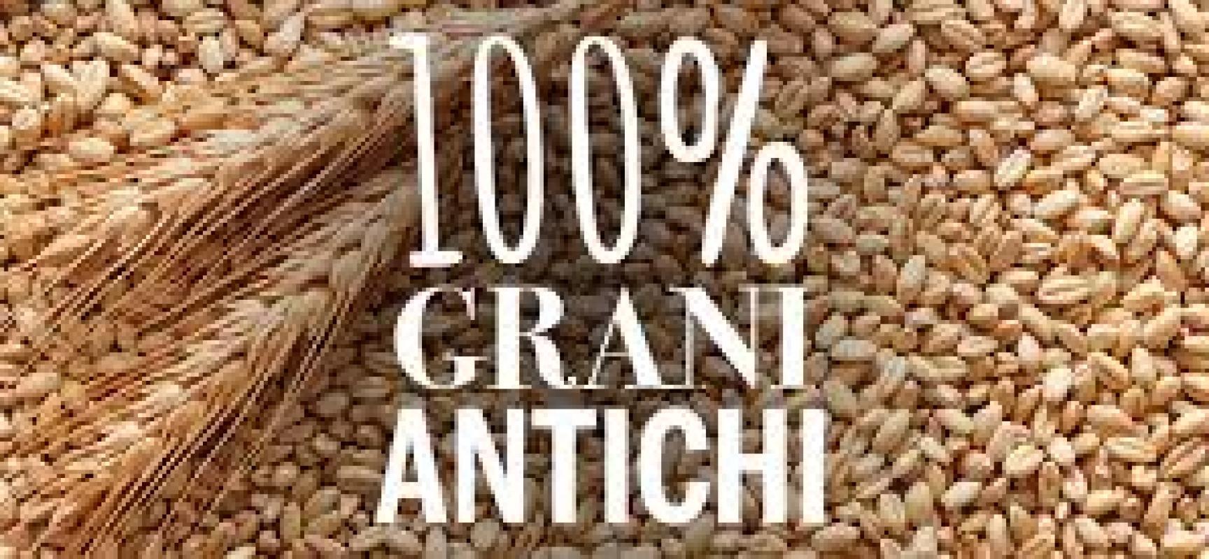 Il grano: quello antico, di appena ieri o quello modificato, industriale ?