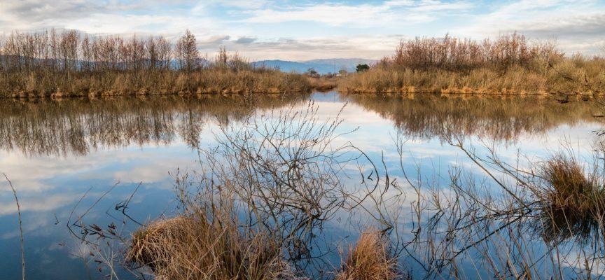 Padule di Fucecchio e Lago di Sibolla,