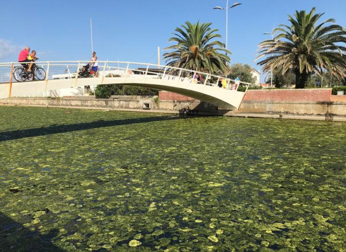 Fossa dell'Abate: il Consorzio rimuove le alghe