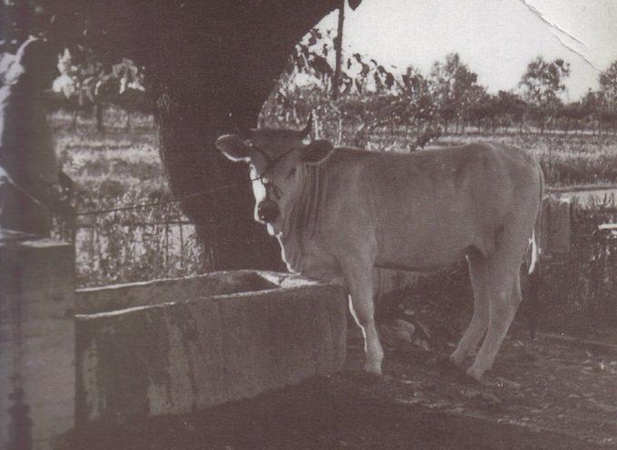 Alla fonte, con gli animali