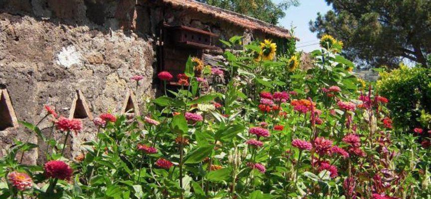I fiori che sopportano il caldo