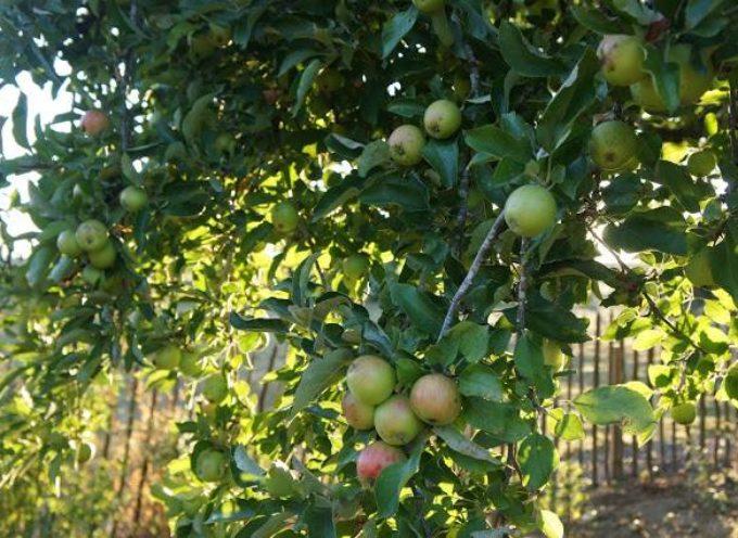 I frutti della tarda estate.