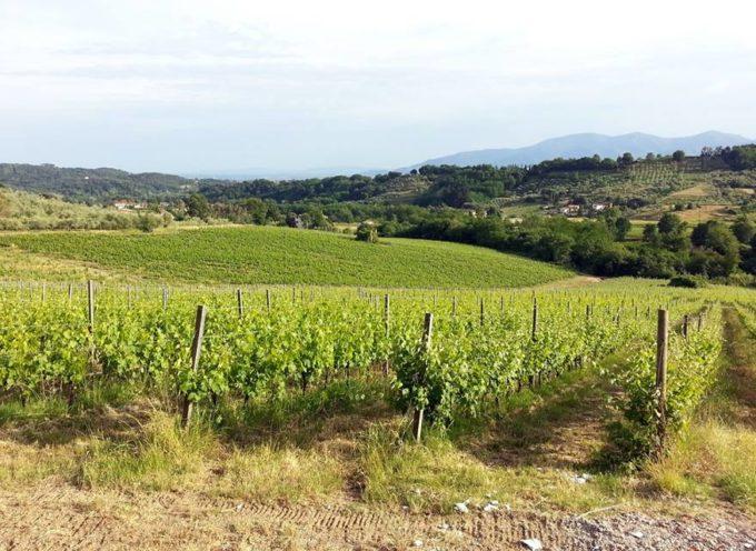 il Meteo per la Valle del Serchio,   Aggiornamento  del 21 agosto