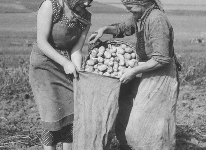 Nella tarda estate si completa la raccolta delle patate.