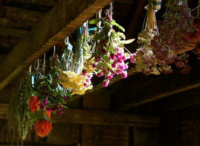 A fine estate si possono mettere ad essiccare fiori ed erbe officinali