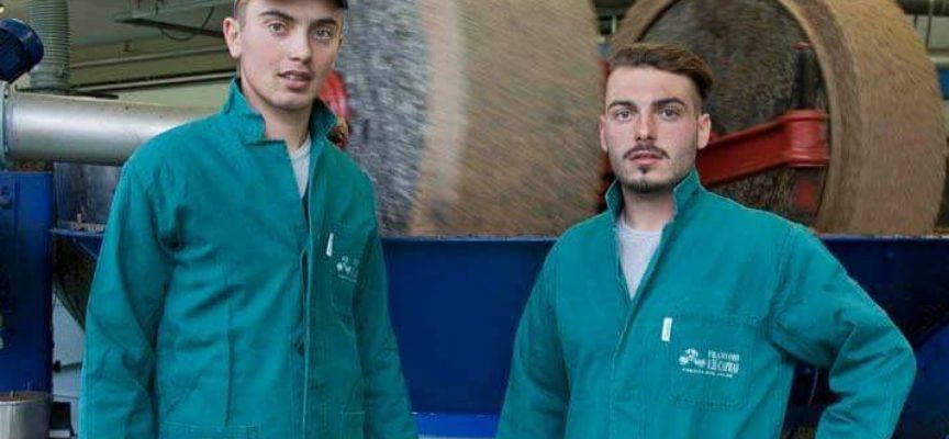 """A Lucca corso per """"Tecnico di Attività di Conduzione dell'oliveto e di gestione del frantoio"""""""