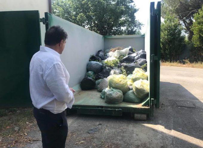 Rifiuti: quasi 19 tonnellate di verde per l'isola mobile di Strettoia, neo amministrazione incrementa giorni conferimento