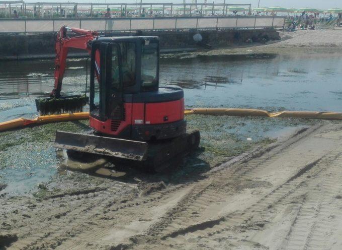 Il Consorzio rimuove le alghe su Farabola e Fossa dell'Abate.