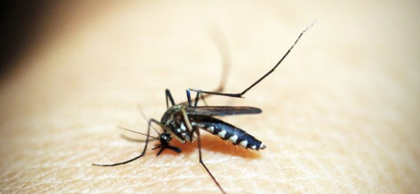Rimedi naturali contro le punture di zanzare. Ecco quali sono