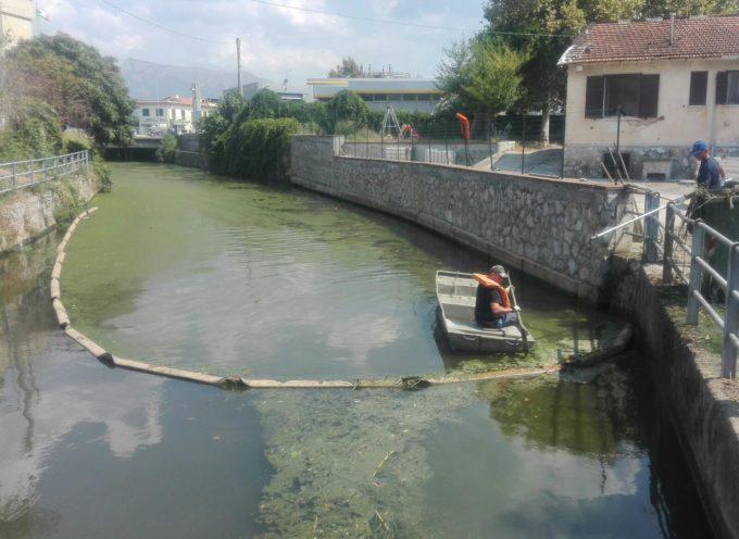 """Il Consorzio incarica esperti per definire la composizione e l'origine del """"lavarone"""" e delle alghe dei rii:"""
