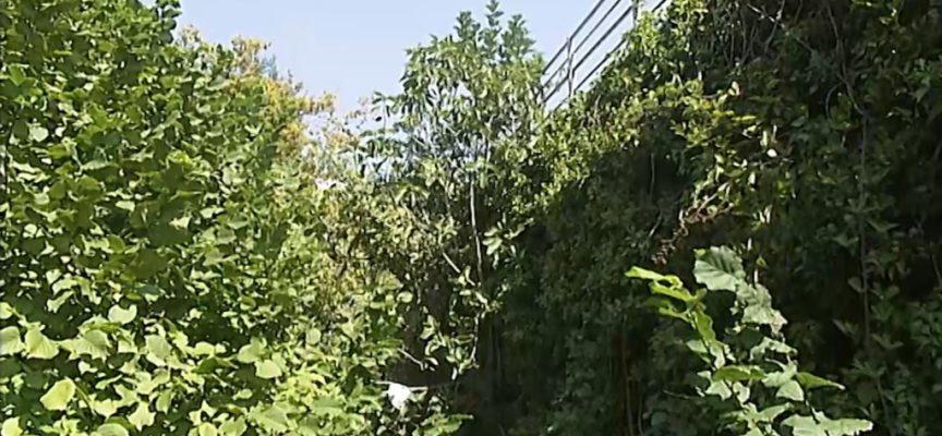 Ponte sulla Turrite invaso dalle piante