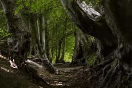 Terra-Trails-sentiero-tra-i-faggi-del-puntato-uai-258x172