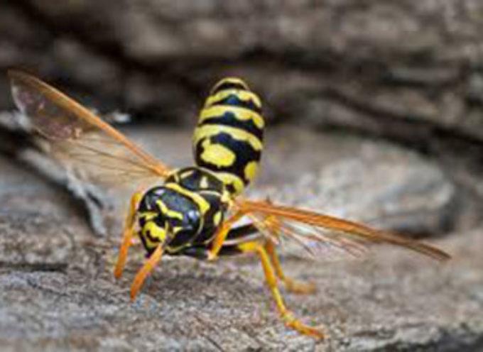 Punto da una grande vespa va in choc anafilattico e muore.