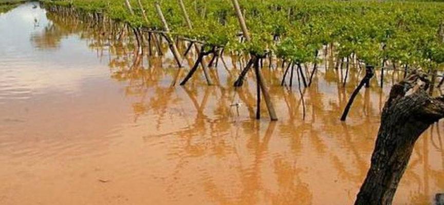 Clima impazzito, l'allarme di Confagricoltura Toscana: «Danni stimati per il 20% delle produzioni ortofrutticole