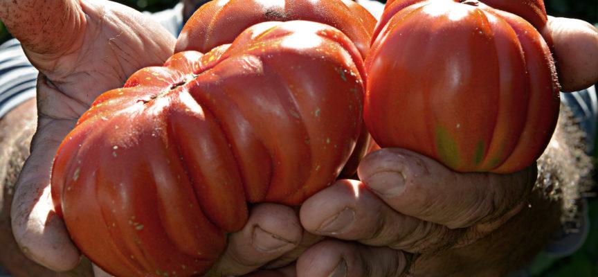 A Porcari la cena dedicata al Presidio Slow Food del Pomodoro Canestrino