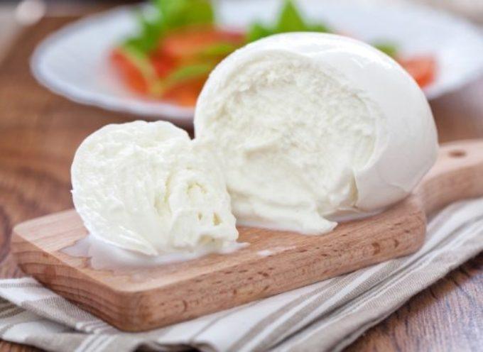 Mozzarella di bufala italiana ritirata per presenza di batterio Listeria. RASFF lancia l'allerta: rischio grave per la salute