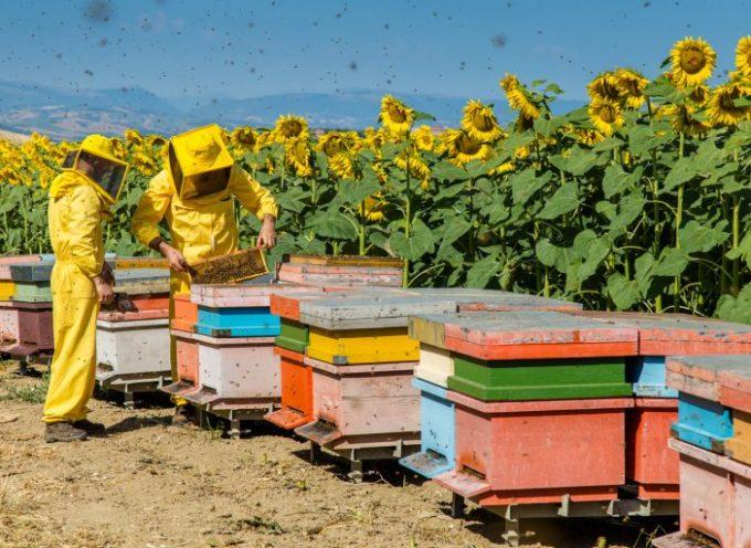 Apicoltura, Variazione alla Legge Regionale Toscana