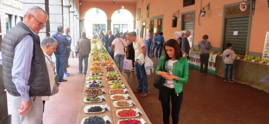 """CASTELNUOVO DI G. –  """"Festa dei frutti antichi della Garfagnana""""."""