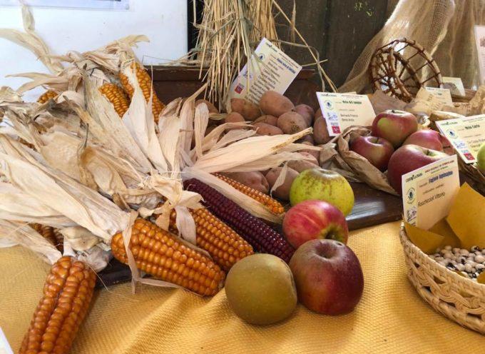 Un tuffo nel passato con la mostra dei frutti antichi della Garfagnana
