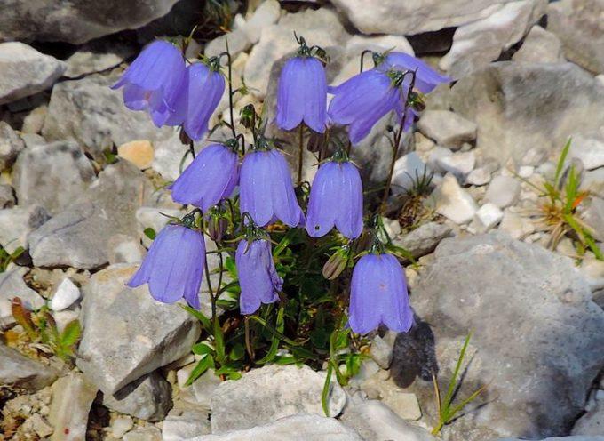 Queste piante, grazie al PIT della Ragione Toscana, sono destinate a sparire dal Passo della Focolaccia