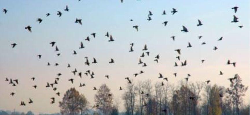 Le grandi migrazioni…