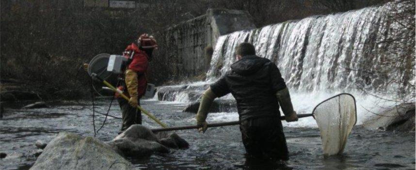 Il monitoraggio delle acque fluviali destinate alla vita dei pesci