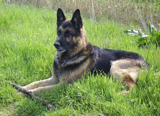 Cassazione: vietato lasciare il cane da solo in giardino, è reato