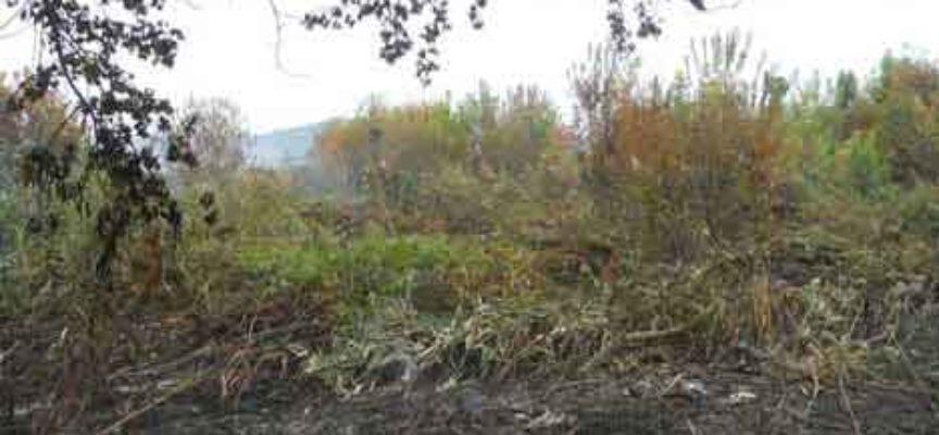 Incendio della torba a Massarosa e maleodoranze a Viareggio