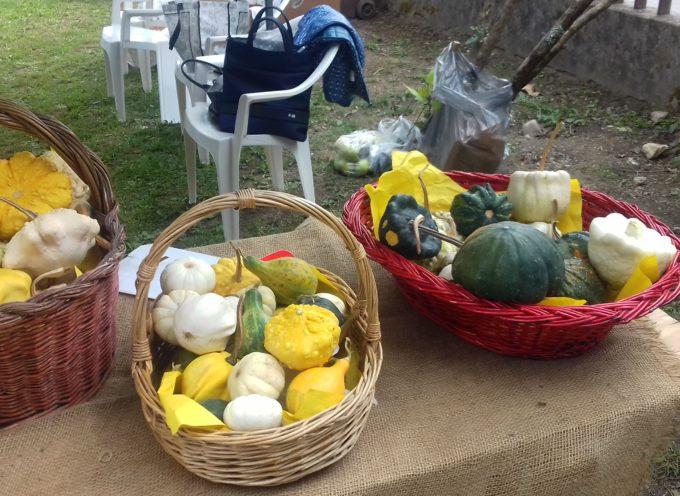 La festa della Zucca, frutto apprezzato ma non troppo[VIDEO]