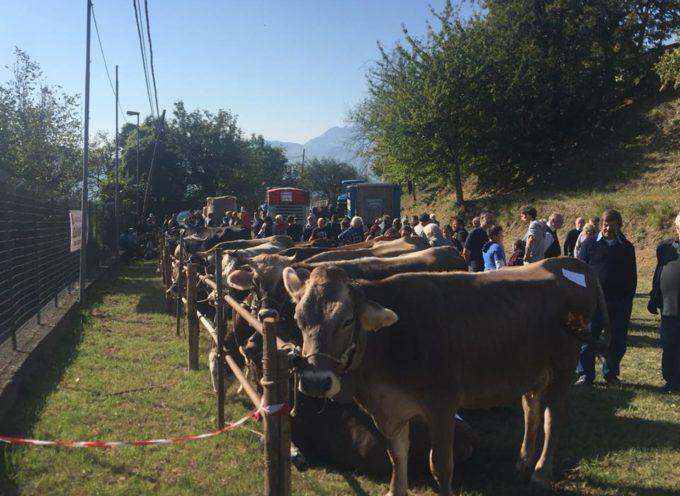 FIERA D'OTTOBRE, 12° Rassegna Fungo, Castagna e Tartufo Scorzone. a CASTIGLIONE DI GARFAGNANA