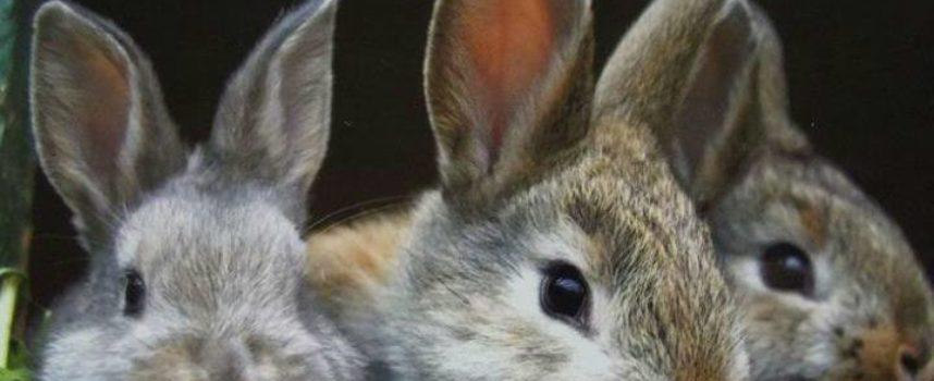 Tra i piccoli animali di campagna il coniglio è sempre presente