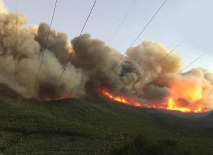 Foreste, 7 milioni per il piano annuale: manutenzione e lotta agli incendi