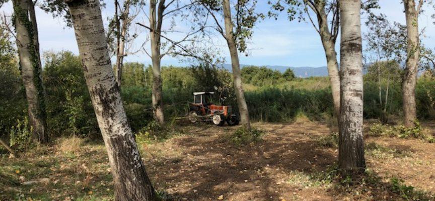 """Progetto Life """"SOS Tuscan Wetlands"""": si lavora a pieno regime nella Paduletta di Ramone e nel Lago di Sibolla"""